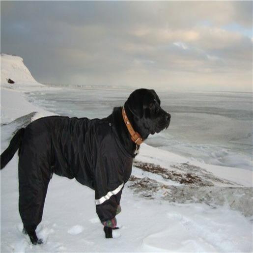 Черный лабрадор в черном комбинезоне смотрит на море